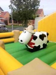 Bebe vache rodeo